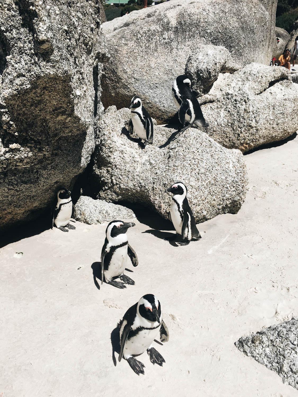 Cape-Town©Cecilia-Capri–18