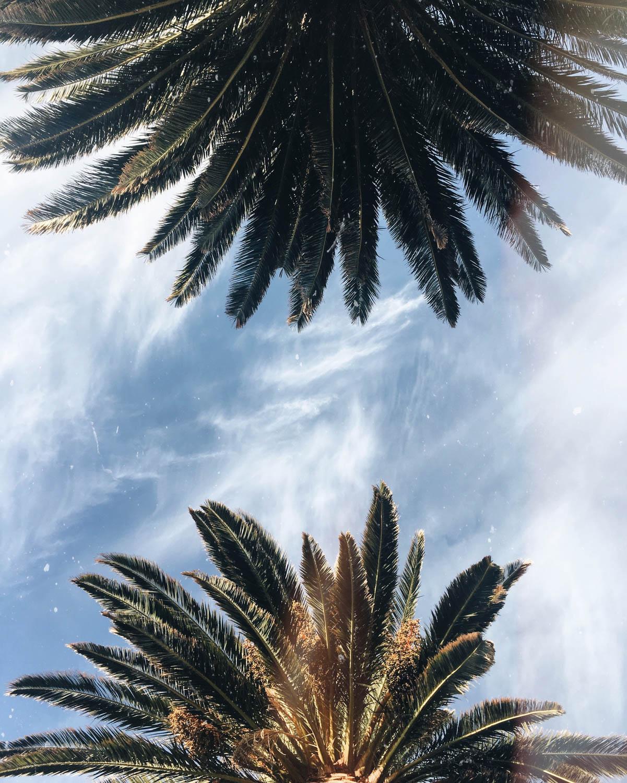 Cape-Town©Cecilia-Capri-1851