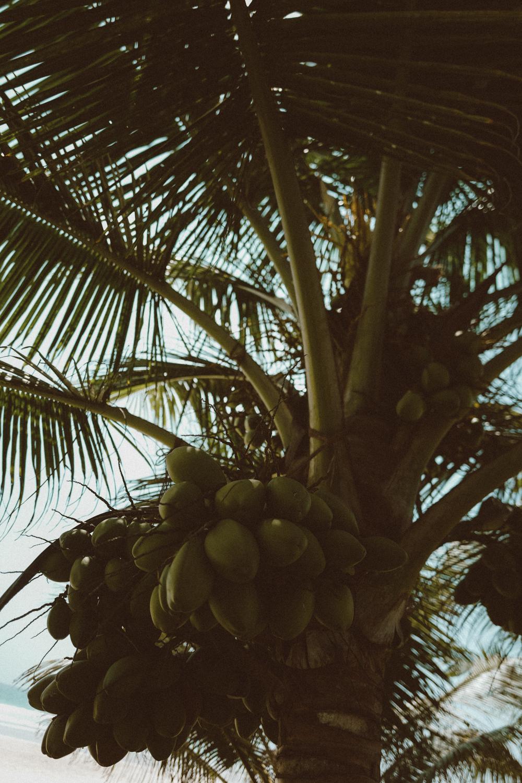 ©CeciliaCapri_Sri-Lanke-Travel-Guide-1480823